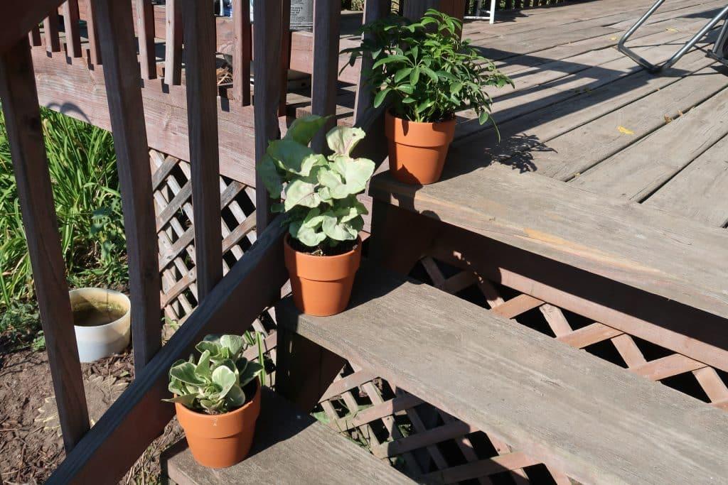 succulents-bjs-club