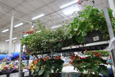 hanging flower baskets out at BJs