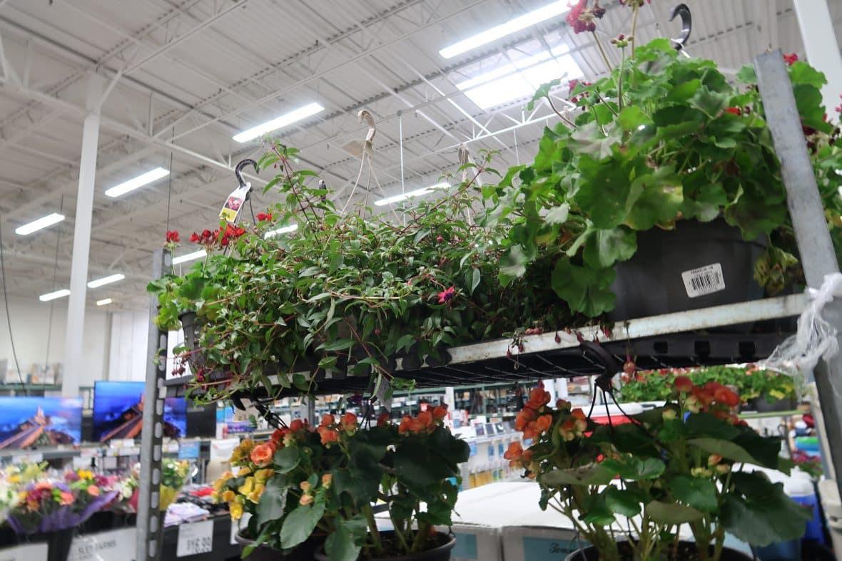 hanging flower baskets out at BJs