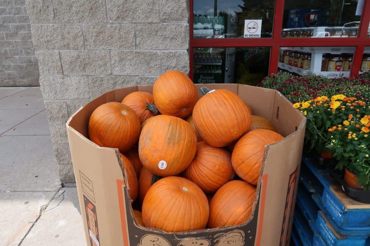 pumpkins and mums at BJs wholesale