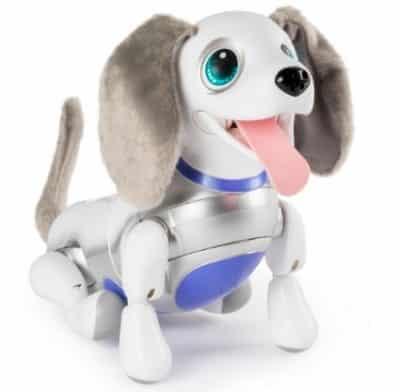 zoomer dog
