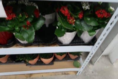 plants at bjs